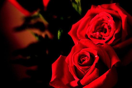 Dites Le Avec Des Fleurs Idees Originales Le Mag Du Romantisme